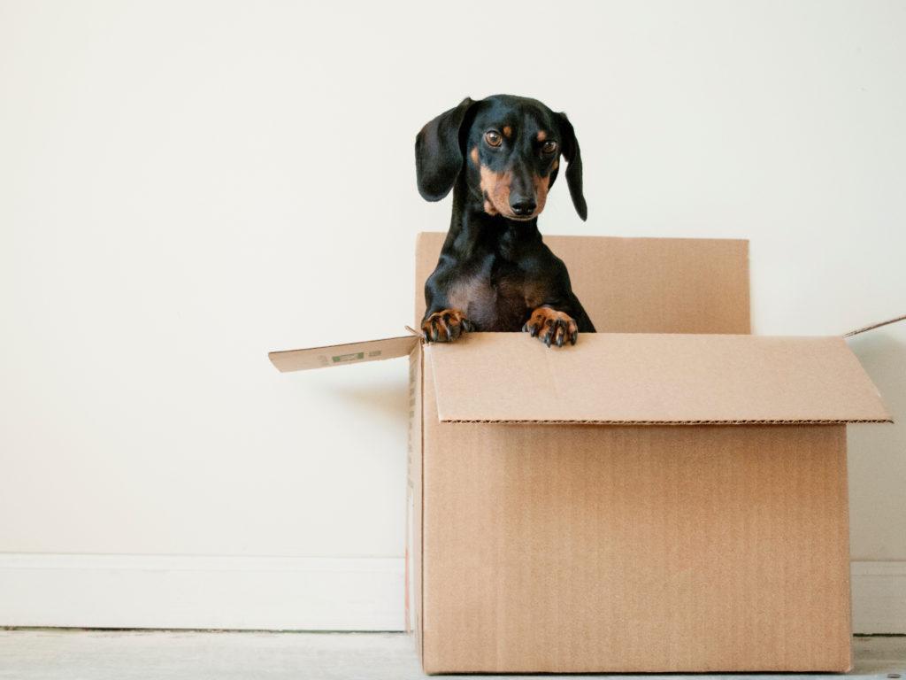 verhuizen-inpakken-uitpakken-opruimen
