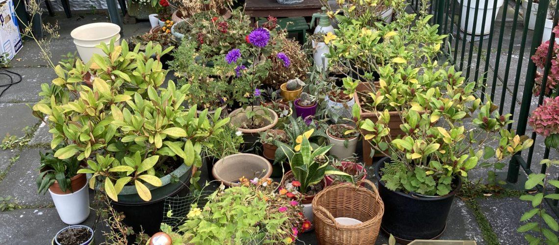 planten en stekjes puzzletree
